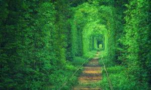 """""""Тунелът на любовта"""" в Клеван, Украйна (Tunnel of Love, Ukraine)"""