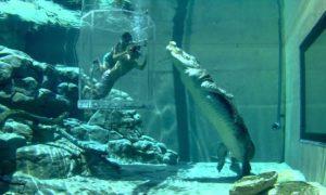 """""""Клетката на смъртта"""", Австралия (Crocosaurus Cove, Australia)"""
