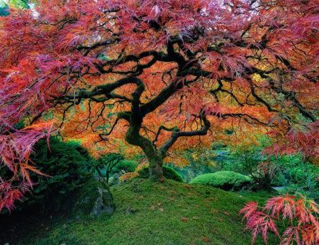 15 от най-величествените дървета в света