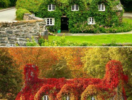 Снимки преди и след настъпването на есента