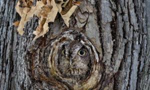 Къде е совата?