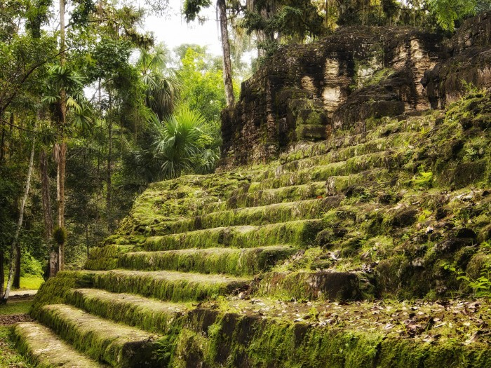 Stairs covered with grass and moss, Tikal