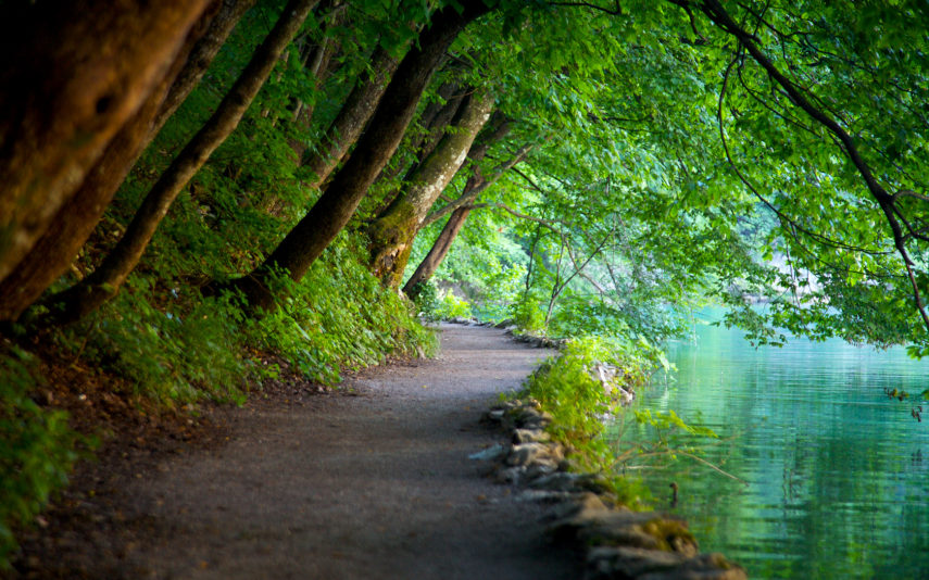 Plitvice-forest