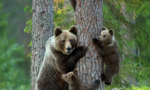 22 възхитителни семейни снимки на животни