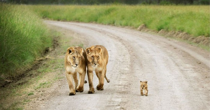 animal-family-portraits-2__880
