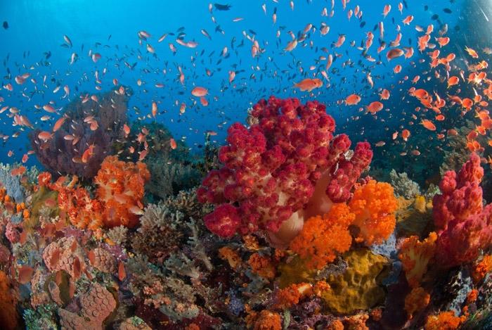 luchshie-korallovye-rify-5