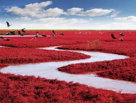 """Невероятният """"Червен плаж"""" в Панджин, Китай"""