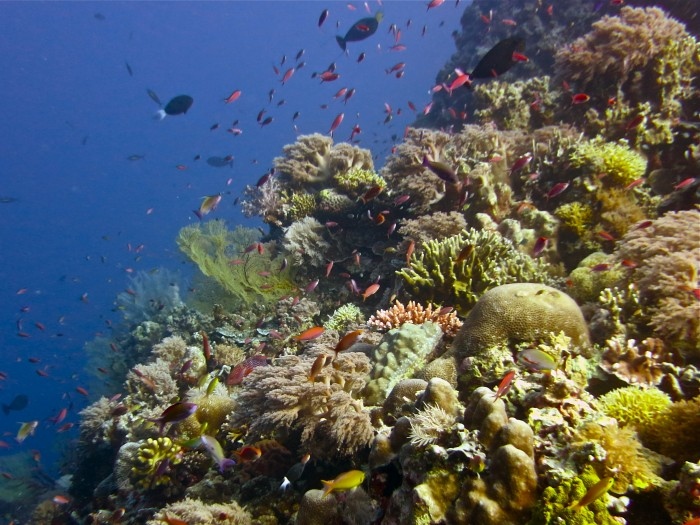 the-biodiversity-of-the-tubbataha-reefs