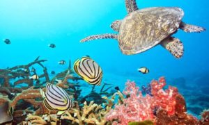 Подводното царство на риф Тубатаха, Филипините