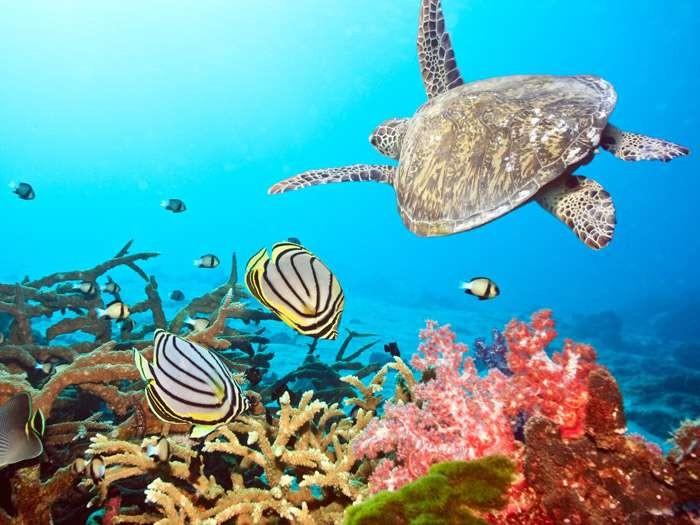 tubbataha-reef-au_ibtimes_com