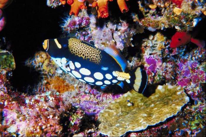 tubbataha-reef-philippines3