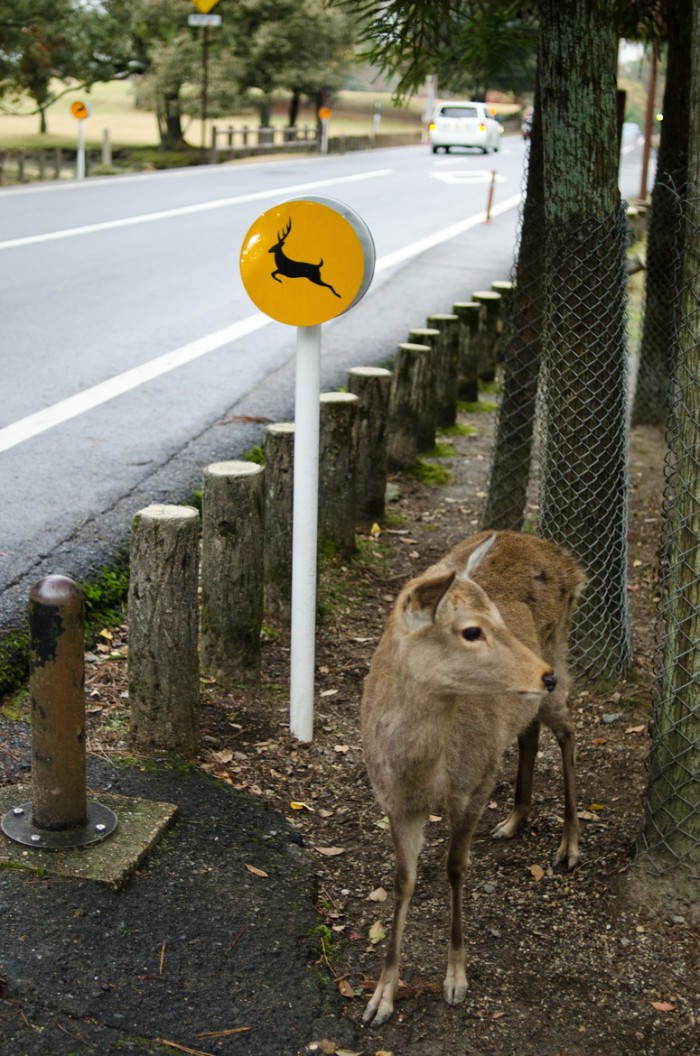 Beware the deers sign in Nara, Japan